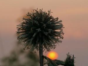 Die Sonne und ... © VDNThalhäuser - Stromberg-Heuchelberg