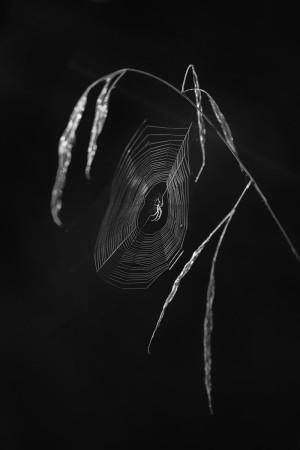 Klicken Sie auf das Bild des Tages im Fotoportal: Die Spinne im Gegenlicht – © VDNAndrea Dies - Bergstraße-Odenwald