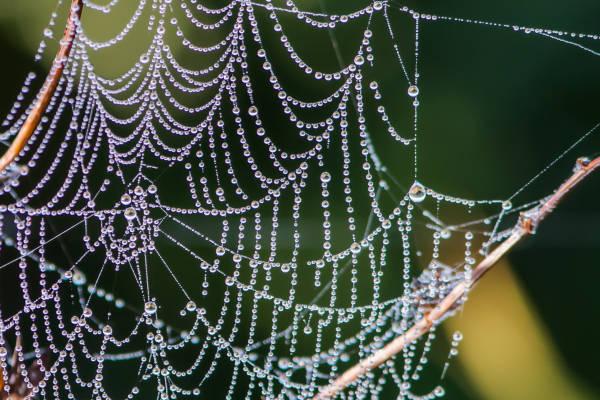 Klicken Sie auf das Bild des Tages im Fotoportal: Die kleinen Wunder der Natur –© VDNGerhard Glatz - Elbhöhen-Wendland