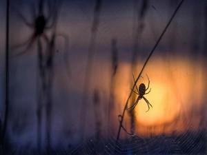 Dunkle Bedrohung – © VDNI. Noack - Nuthe-Nieplitz