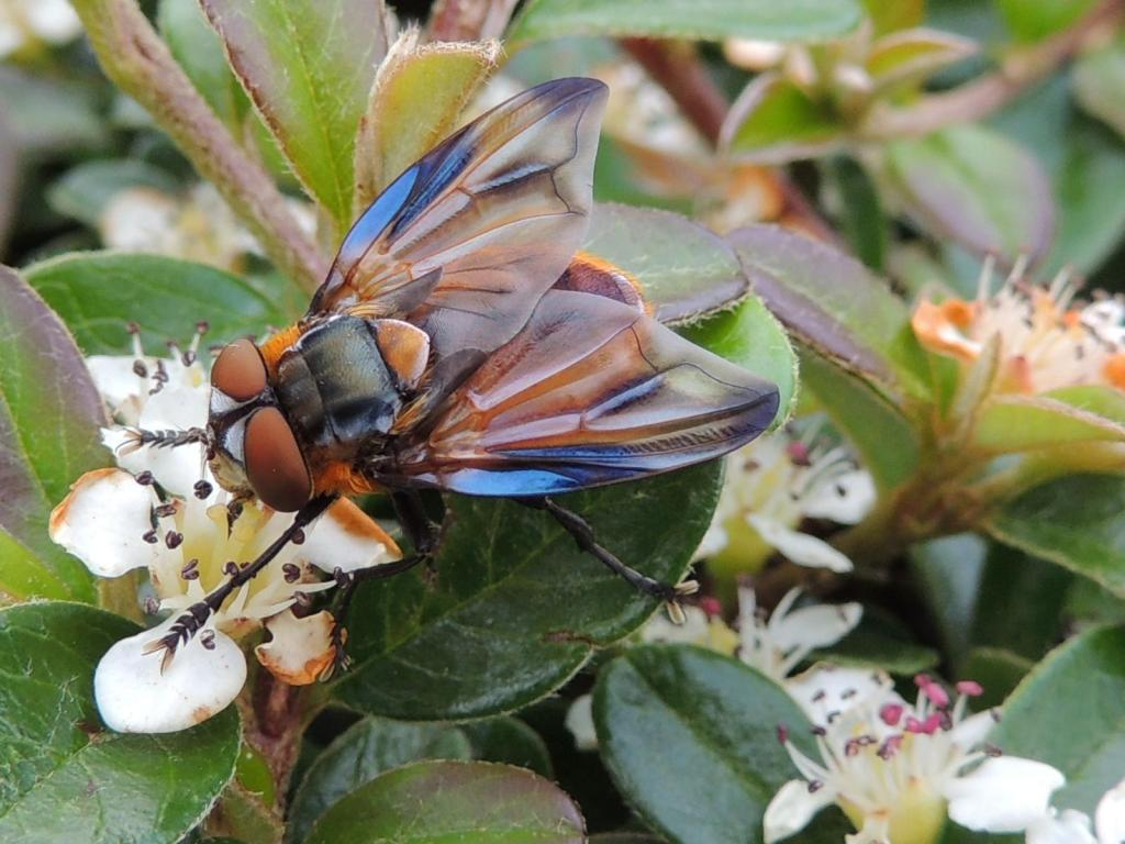 Edelstein oder doch nur eine Fliege - © VDNMartina Müller - Pfälzerwald