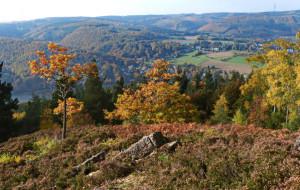 Klicken Sie auf das Bild des Tages im Fotoportal: Eifelblick im Herbst – © VDNChristel Baude - Deutsch-Belgischer Naturpark Hohes Venn - Eifel