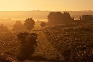 Ein Sommermorgen im Feld – © VDNMatze - Stromberg-Heuchelberg