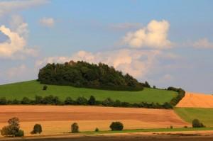 Klicken Sie auf das Bild des Tages im Fotoportal: Eine schöne Hecke – © VDNbikender - Zittauer Gebirge