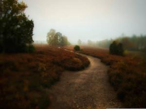 Klicken Sie auf das Bild des Tages im Fotoportal: Einsam und verlassen – © VDNCarlo - Südheide