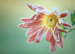 Klicken Sie auf das Bild des Tages im Fotoportal: Eiskalt erwischt! – © VDNUlrike Sobick - Rheinland