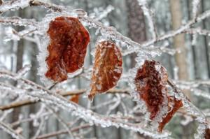 Klicken Sie auf das Bild des Tages im Fotoportal: Eisregen – © VDNWerner Schuster - Steinwald