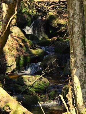 Elixier der Lebensfreude – © VDNChristine R. Sigl - Bayerischer Wald
