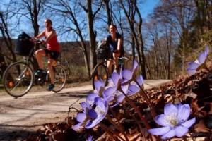 Endlich Frühling – (c)VDNFilipp - Altmühltal
