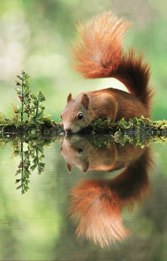 Klicken Sie auf das Bild des Tages im Fotoportal:Erfrischung – © VDNjulian.rad - Bayerischer Wald