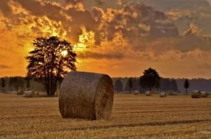 Erntezeit – © VDNBernd Tanneberger – Niederlausitzer Landrücken