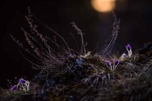 Felskopf im Frühjahr – (c)VDNStephan Amm - Fränkische Schweiz - Veldensteiner Forst