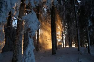 Flammen und Feuer oder – © VDN-Andy72 - Südschwarzwald