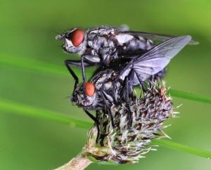 Fliegen – © VDNBrezina Peter - Fichtelgebirge