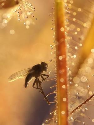 Klicken Sie auf das Bild des Tages im Fotoportal: Fliegen-Himmel...(HF) – © VDNUlrike Sobick - Rheinland