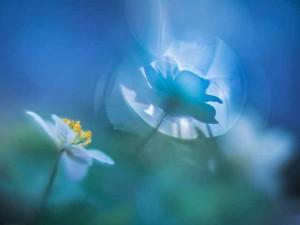 Klicken Sie auf das Bild des Tages im Fotoportal: Flora aqua – © VDNI. Noack - Nuthe-Nieplitz