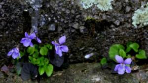 Frühling.... – © VDNUlrike Sobick - Rheinland