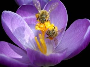 Klicken Sie auf das Bild des Tages im Fotoportal: Frühlingserwachen – © VDNWalter J. Pilsak - Steinwald