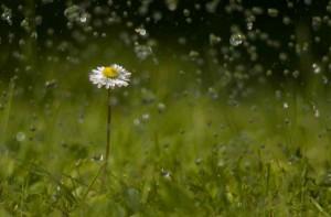 Frühlingserwachen – (c)VDNHellwig - Lauenburgische Seen