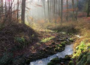 Klicken Sie auf das Bild des Tages im Fotoportal: Frühlingsgefühle – © VDNJohannes Brenner - Habichtswald