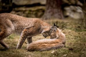 Frühlingsgefühle – (c)VDN tombraun - Fränkische Schweiz - Veldensteiner Forst