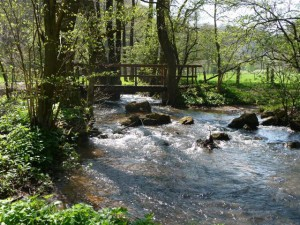 Klicken Sie auf das Bild des Tages im Fotoportal: Frühling am Gillesbach – © VDNRolf Hilgers - Deutsch-Belgischer Naturpark Hohes Venn - Eifel