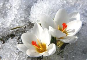 Klicken Sie auf das Bild des Tages im Fotoportal: Frohe Ostern – © VDNFritz Eichmann - Bayerischer Wald
