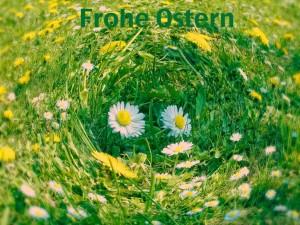 Frohe Ostern – © VDNUdo Dittmann - Elm-Lappwald