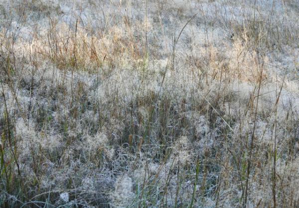 Klicken Sie auf das Bild des Tages im Fotoportal: Frostwiese – © VDNBrezina Peter - Fichtelgebirge