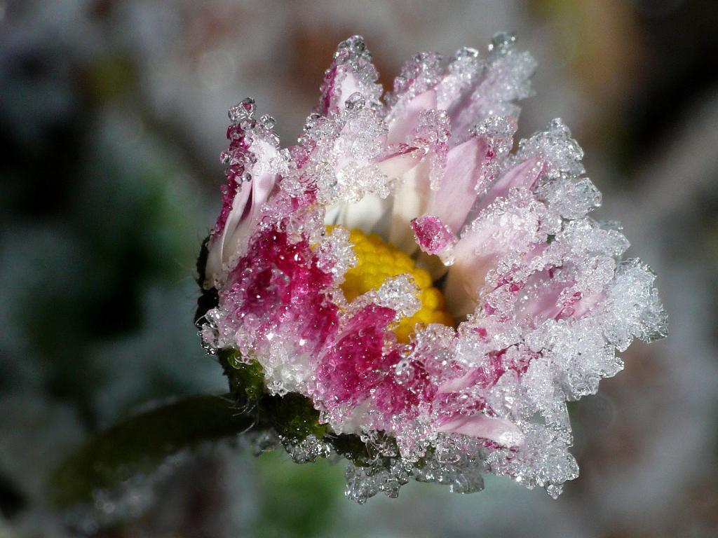 Klicken Sie auf das Bild des Tages im Fotoportal: Gänseblümchen – © VDNThomas Enslein - Oberpfälzer Wald