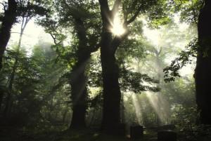 Klicken Sie auf das Bild des Tages im Fotoportal: Gegenlicht – Herbststimmung – © VDNflor - Südeifel