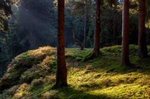 Klicken Sie auf das Bild des Tages im Fotoportal: Geheimnisvolle Teufelsküche – © VDNHans-Jürgen Schmidt - Nördlicher Oberpfälzer Wald
