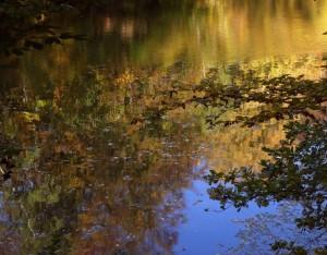 Goldener Oktober – © VDNJohannes Brenner – Habichtswald