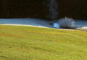 Klicken Sie auf das Bild des Tages im Fotoportal: Grüner Winter – © VDNSabine Kotz - Bayerischer Wald