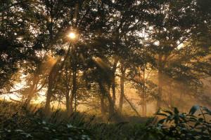 Klicken Sie auf das Bild des Tages im Fotoportal: Herbst I – © VDNchristel kessler - Saar-Hunsrück