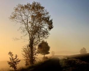 Herbst Nebel – © VDNWerner - Hessische Rhön