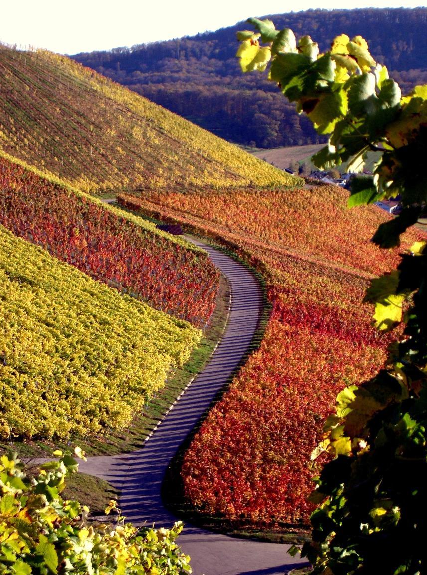 Herbst im Weinberg  - © VDNGeorg Milasta – Stromberg-Heuchelberg