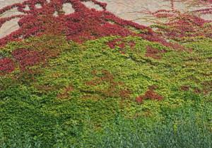 Klicken Sie auf das Bild des Tages im Fotoportal: Herbst in der Stadt – © VDNJohannes Nutt – Teutoburger Wald  Eggegebirge