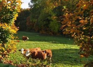 Herbstfarben – © VDNGerhard - Zittauer Gebirge