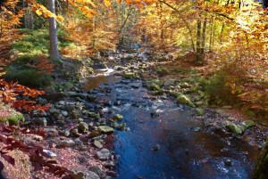 Klicken Sie auf das Bild des Tages im Fotoportal: Herbstfarben an der Hill – © VDNChristel Baude – Deutsch-Belgischer Naturpark Hohes Venn - Eifel