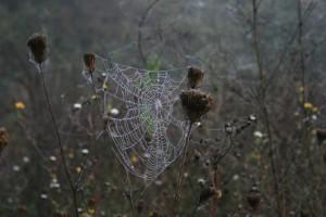 Herbstimpressionen 9 – © VDNDirk Neitzert – Südeifel