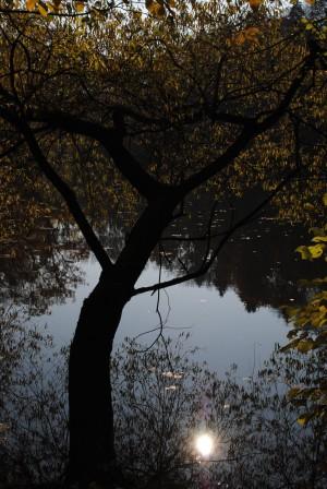 Herbstlaub – © VDNVolker Schmidt - Lahn-Dill-Bergland