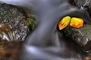 Herbstlicher Silberbach – © VDNJürgen Kemper - Teutoburger Wald  Eggegebirge