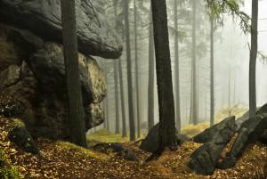 Klicken Sie auf das Bild des Tages im Fotoportal: Herbstnebel – © VDNBernd Tanneberger - Zittauer Gebirge