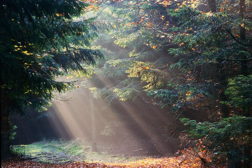 Herbststimmung – © VDNRüdiger Haase - Teutoburger Wald  Eggegebirge