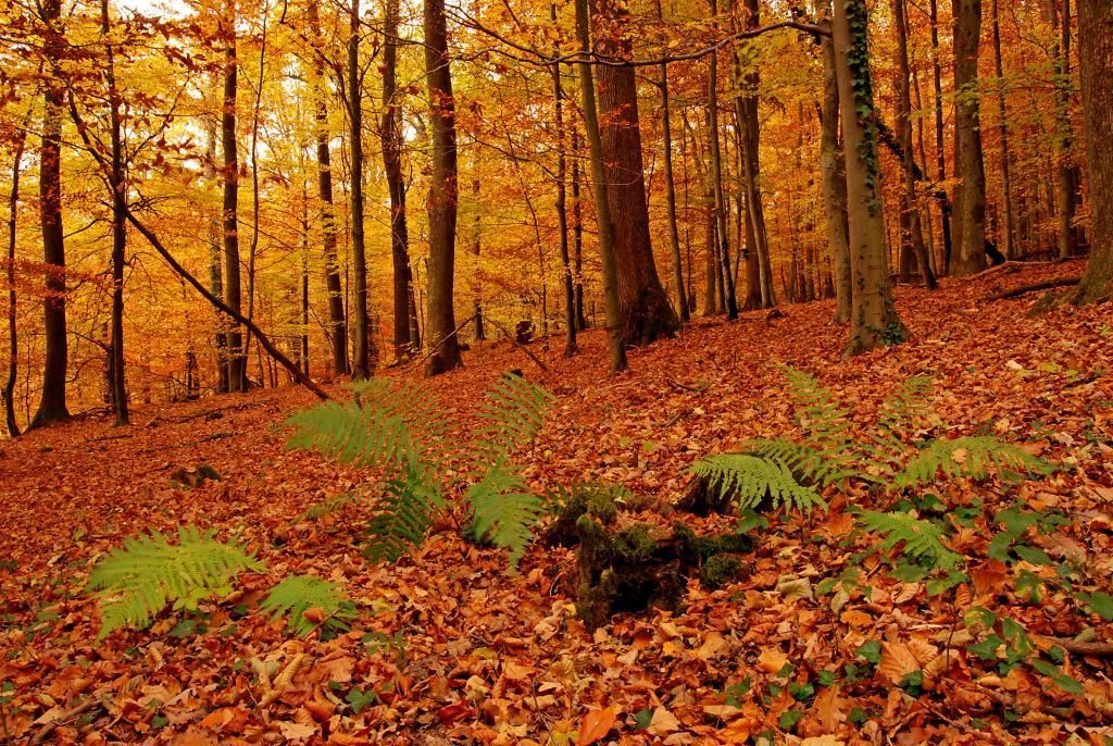 Herbstwald – © VDNJürgen Busse - Bergstraße-Odenwald