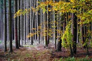 Herbstwald – © VDNSchönmüller – Bergstraße-Odenwald