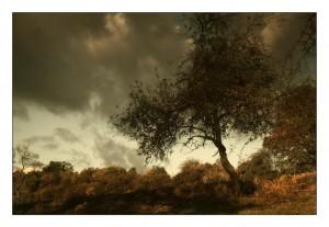 Herbstwetter – ©VDNardgalen- Hoher Vogelsberg