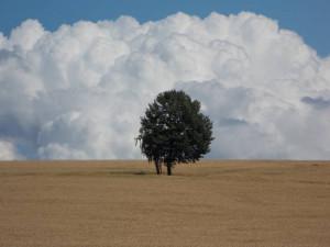 Klicken Sie auf das Bild des Tages im Fotoportal: Himmel und Erde – © VDNRalf Köhler - Muldenland - in Gründung
