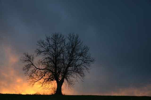 Klicken Sie auf das Bild des Tages im Fotoportal: Im Abendlicht – © VDNHans-Jürgen Schmidt - Steinwald